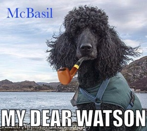 McBasil's Profile image for his new Facebook Page...