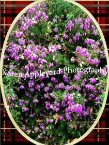 Scottish Heather added for luck...