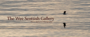 I now needed a name, an image, a theme etc! 'The Wee Scottish Gallery', was formed!