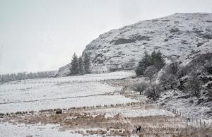 Snowy Ardmair