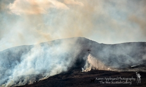 Sadly, a spate of Wild Fires swept across the Highlands...