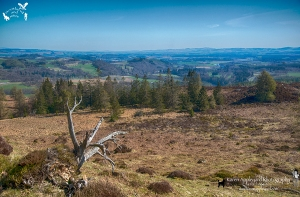 Perthshire View