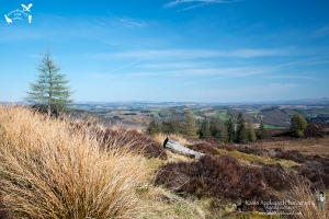 A Perthshire View